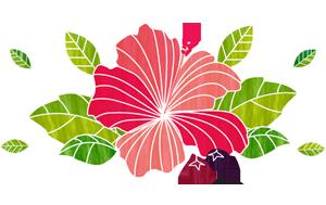 faq-hibiscus